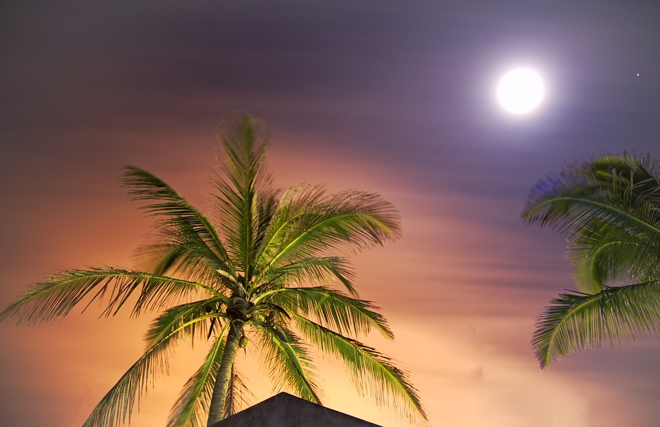 Palms, evening sky and a moon