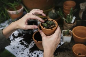 A woman re-potting a plant.