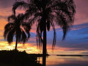 Palm trees during sunset.