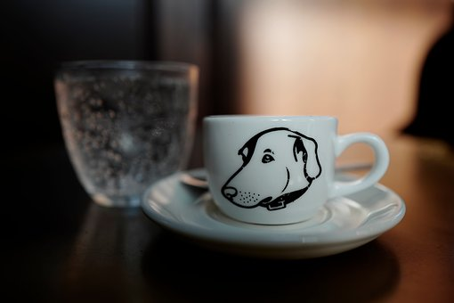 Top pet-friendly restaurants in Tampa