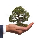 a tree in a palm of a hand