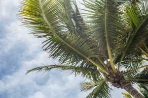 First-time home buyers in Florida are going to see a lot of palm trees like this one