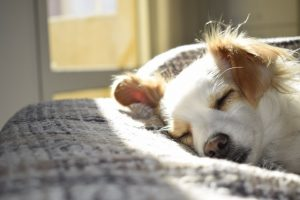 Dog sleeping before your move from NYC to Florida with pets