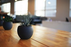 Potted plant is a great gift if you organize a virtual housewarming party when moving from NYC to Florida