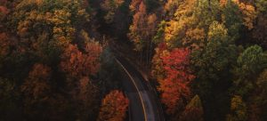 road going through a forest in fall